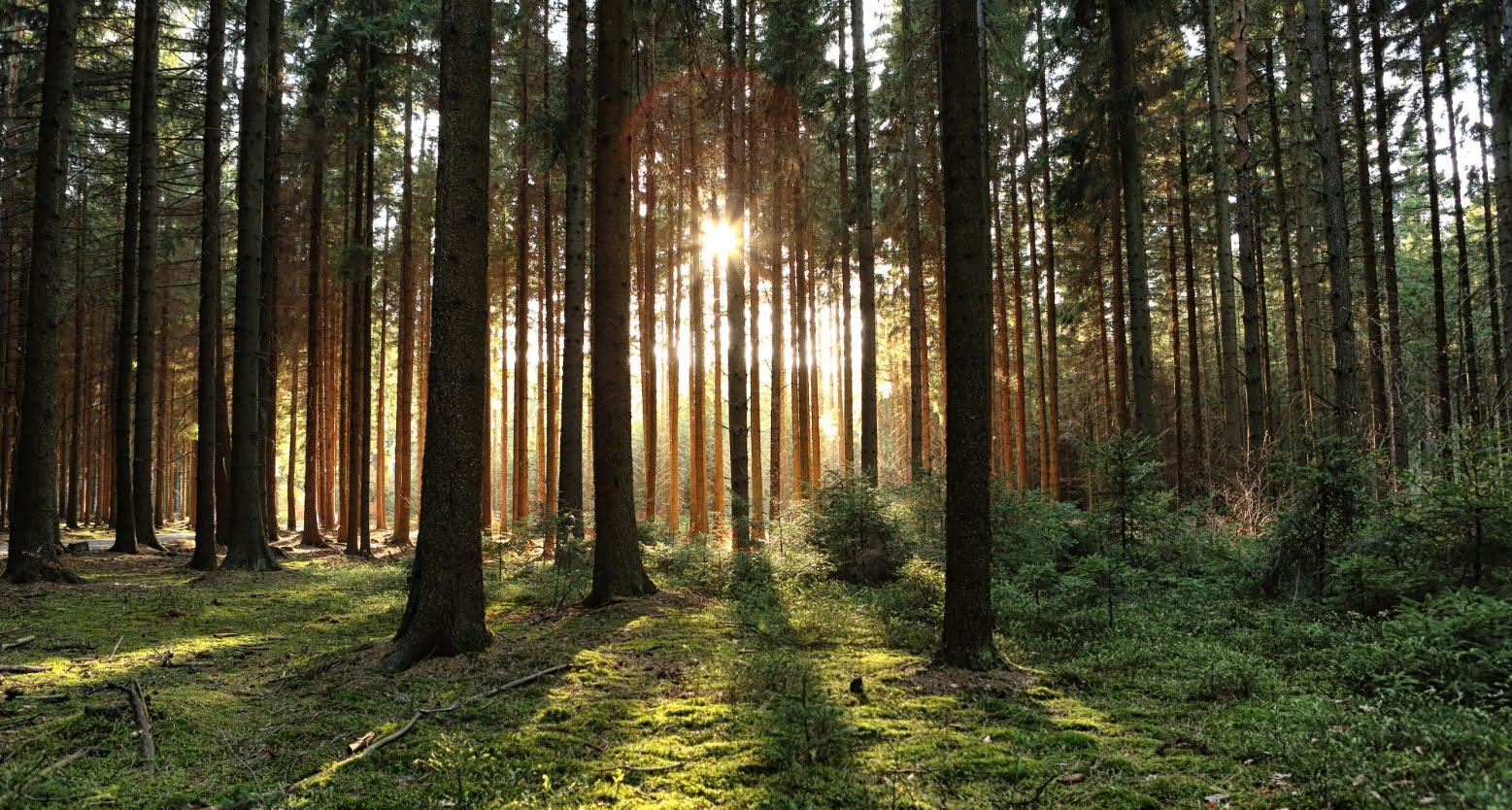 Forêt | Elior